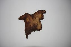 Sevcan Yuksel Henshall, The Moth