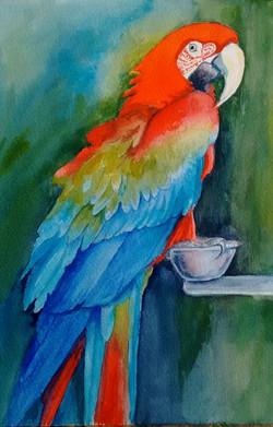 Tessa Spanton 2. Scarlet Macaw Spanton