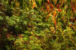 Fruits of The Autumn Harvest - Julian He