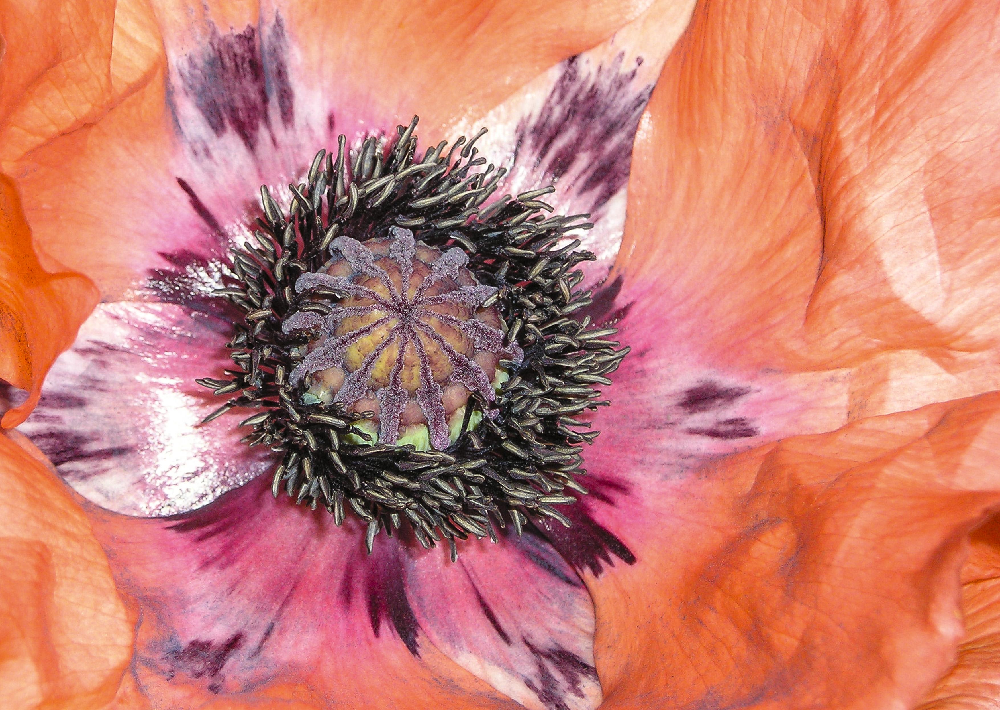 Ted Eggs Orange flower