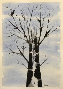 Doug Shaw Bird On A Winter Tree