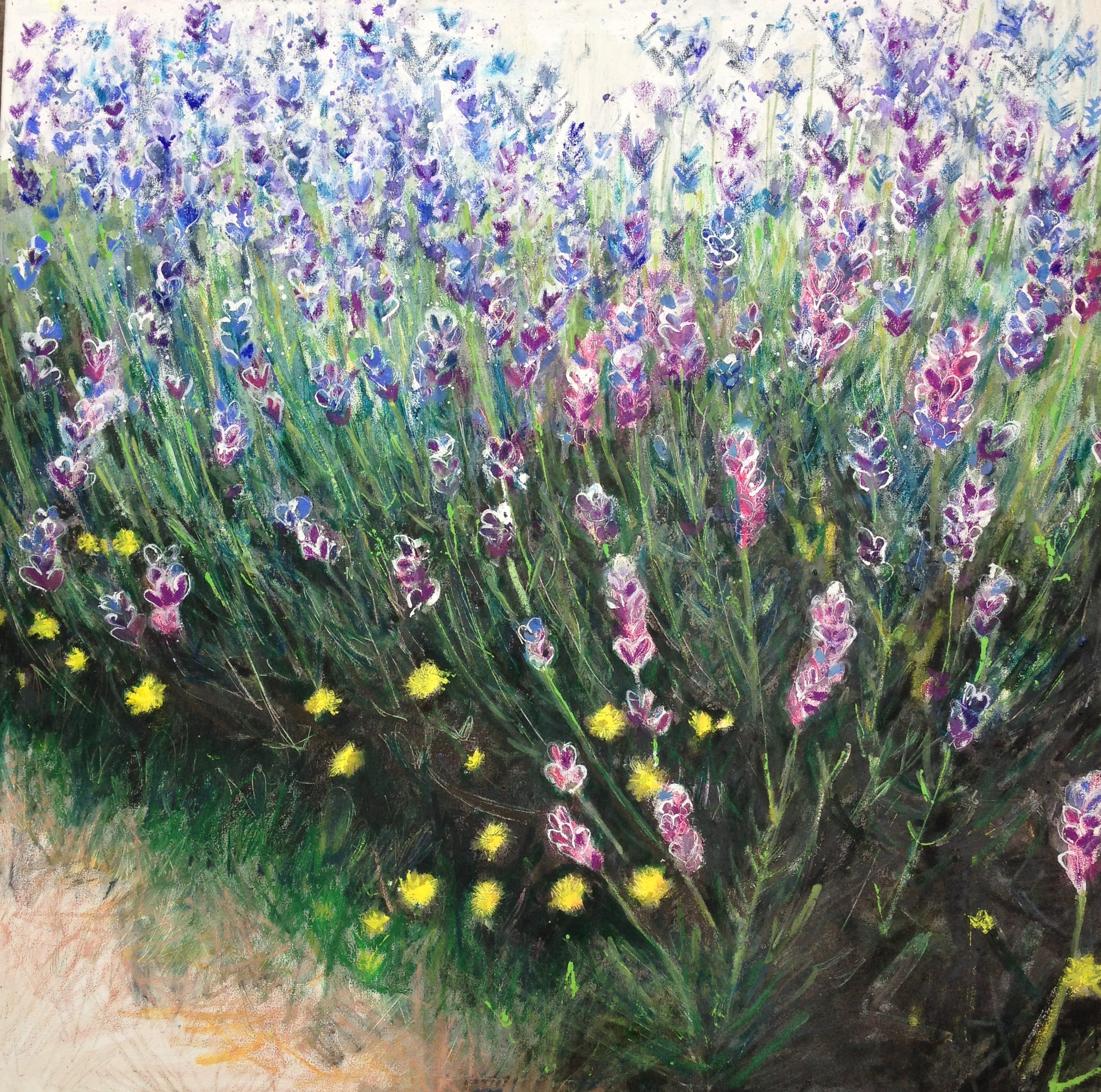 Jo Sharpe Mayfield's lavender