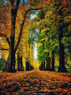 Zoë_Nihill_Autumnal_Avenue
