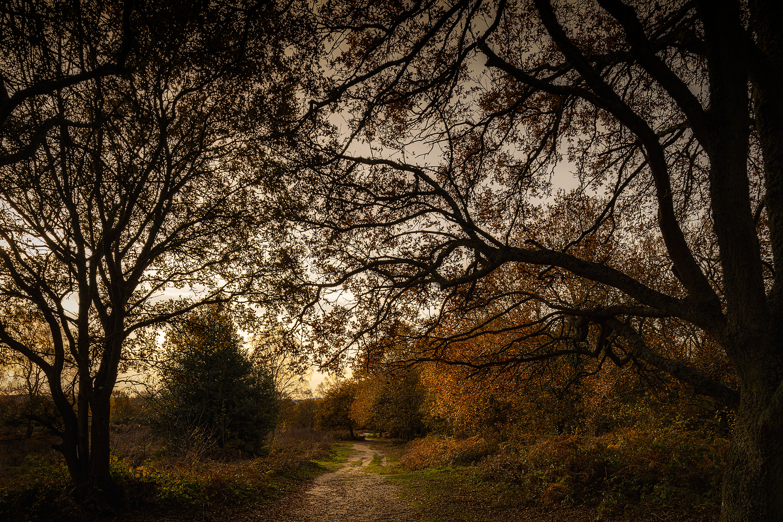 Autumnal Headley Heath, Surrey Hills AON