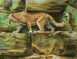 On_Patrol-persian leopard - Gavin M