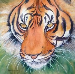 Tessa Spanton 3.Tiger T Spanton
