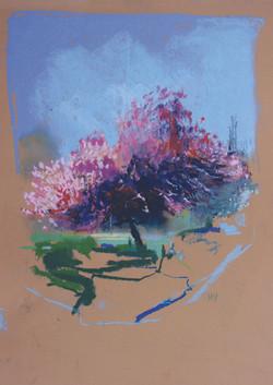 Large Blossom, Grove Park