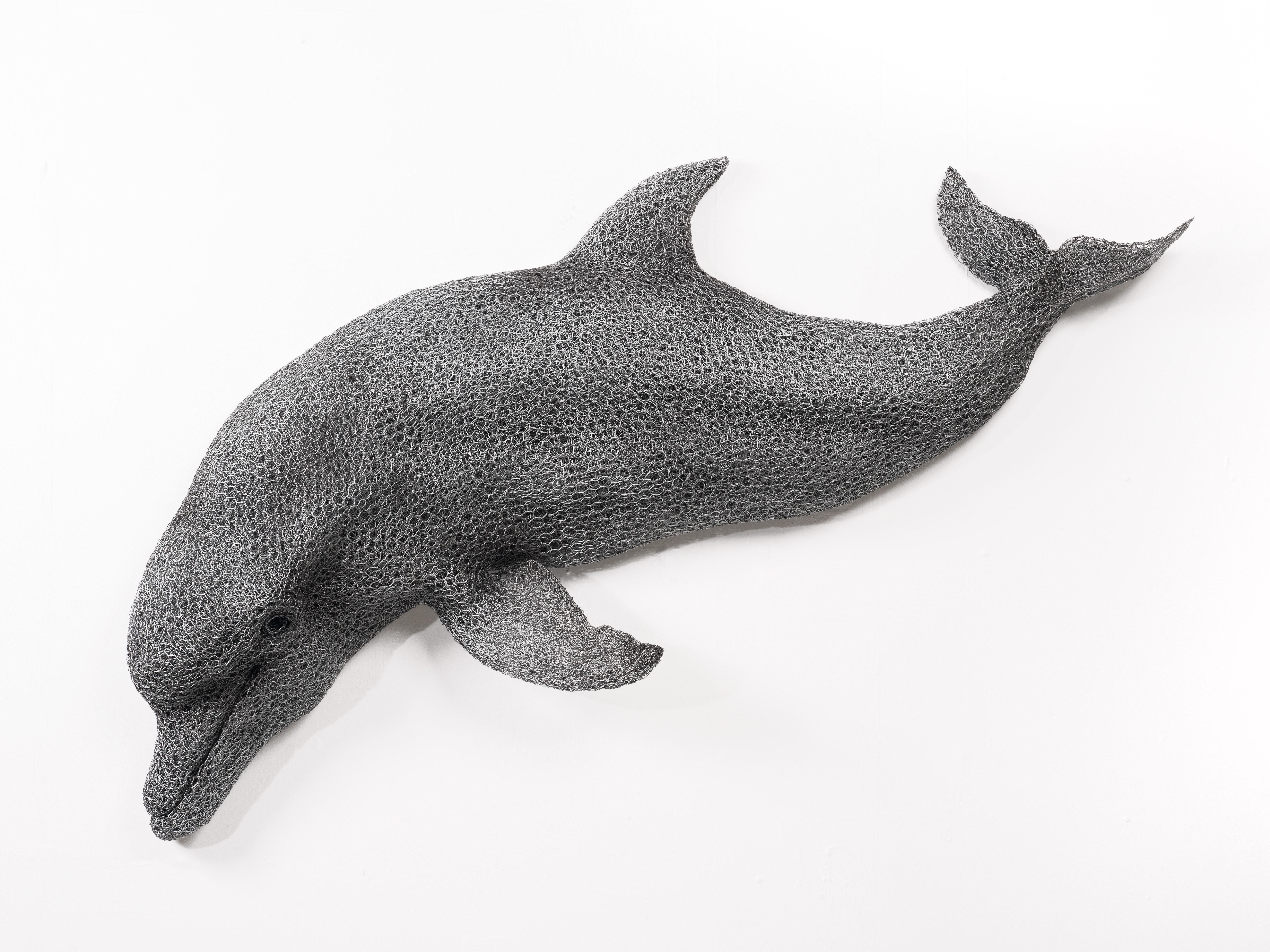 Kendra Haste Bottlenose dolphin