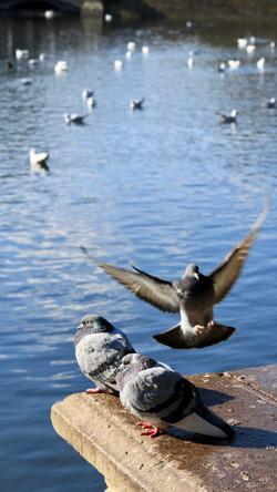3pigeons - Phil Evans
