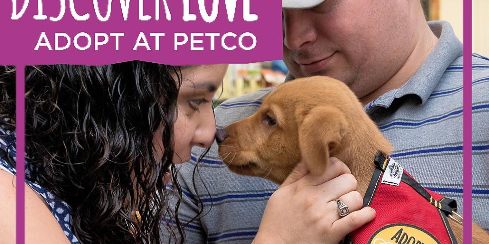 October Petco Adoption Event