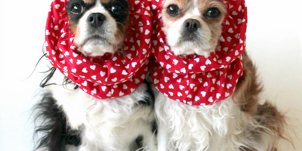 Find Your PAWfect Valentine Event