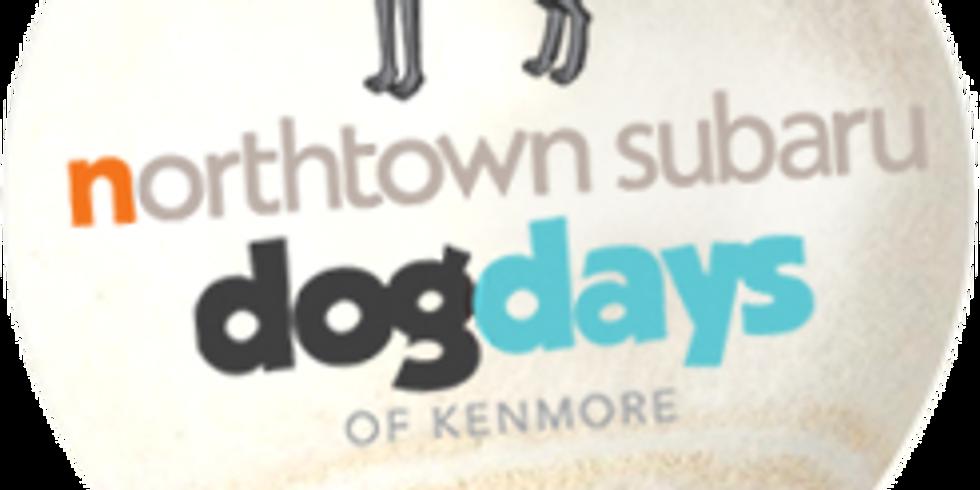 Dog Days of Kenmore