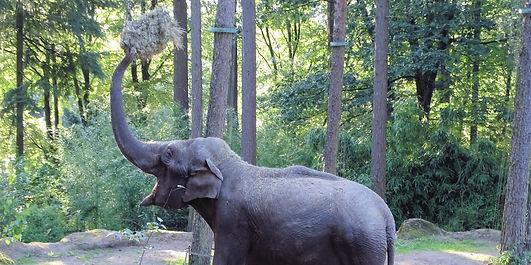 elephant-978629_edited_edited.jpg