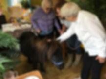 Animal visits copy.jpg
