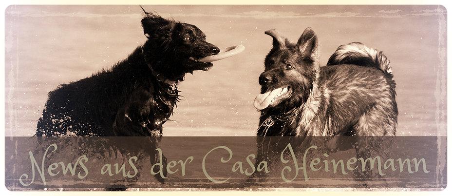 Hovawart und Schäferhund