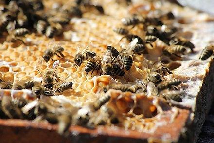 bees-3601859_640.jpg