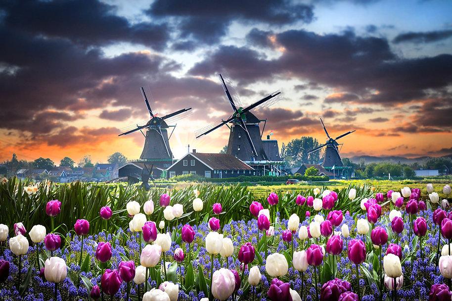 Shutterstock foto tulpen (1).jpg