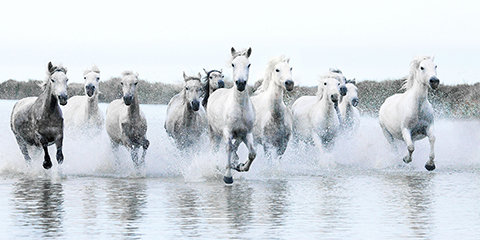 Galloping Mares by Sally Edwards