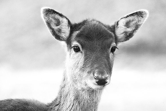 Look of Innocence by Sally Edwards