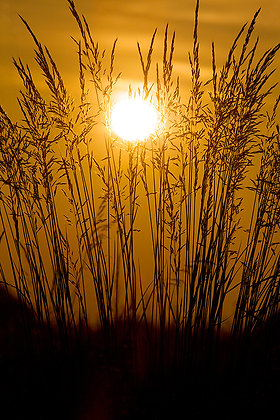 Golden Rise by Sally Edwards