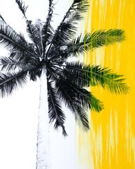 Yellow Palms 3
