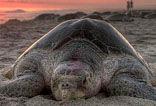 surf ranch turtle tours san juan del sur nicaragua, la flor