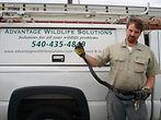 virginia snake removal, harrisonburg snake control, charlottesville snake removal, staunton snake, waynesboro snake, richmond snake removal, fredricksburg snake removal
