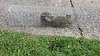 Richmond Squirrel Removal