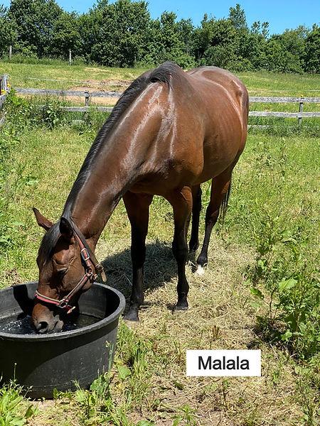 Malala1_edited_edited_edited.jpg