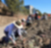MtUm planting Nov 2019.jpeg