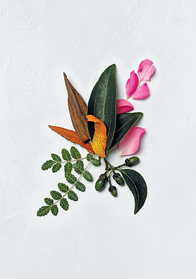 Aveda Ingredients | The Intaglio Salon