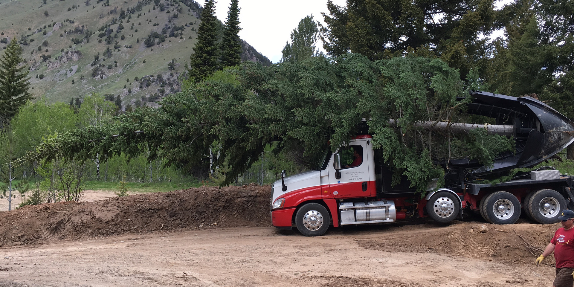 A very large tree on our spade truck