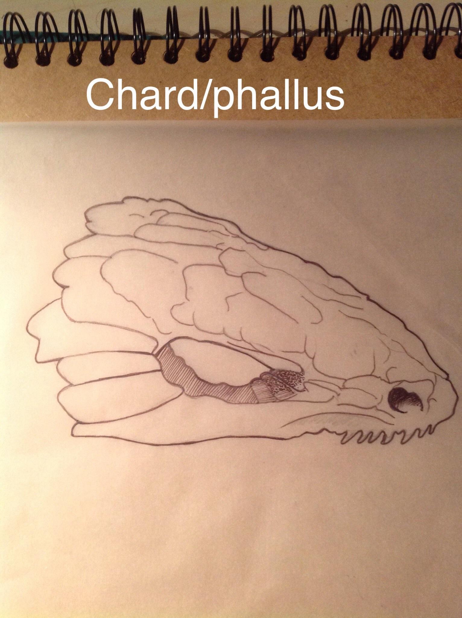 PHALLUS IMPUDICUS- REPTILE CHARD 2
