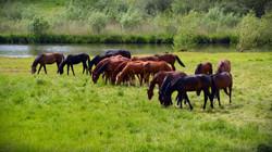 grass-field-meadow-prairie-flower-flock-