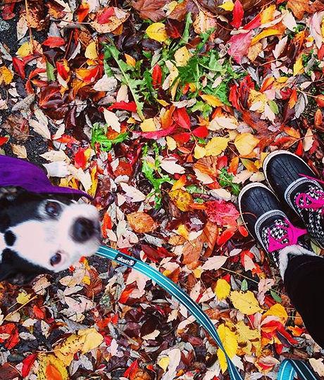 Jake and boots! #bostonterrier #bostonterriers #bostonterriersofinstagram #seattledogwalker #seattle