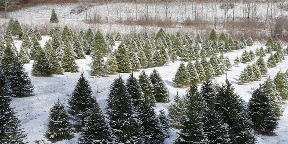Christmas Tree Sale & Holiday Bazaar