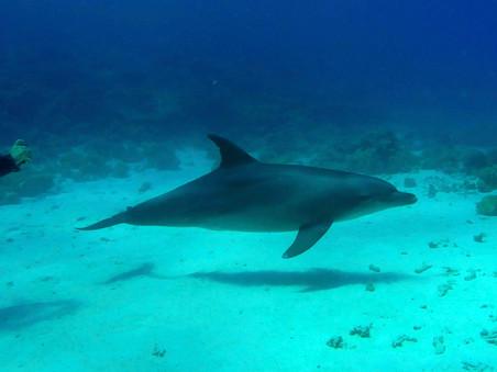 [Essay] Dolphin Interrogation