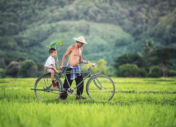 Bike parasol