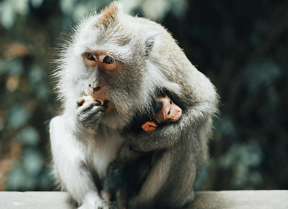 Monkey and her baby