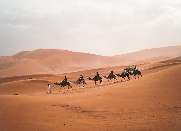 The camel walk