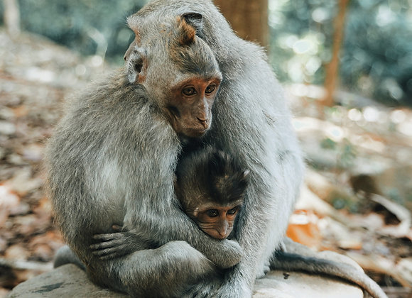 Monkey family love