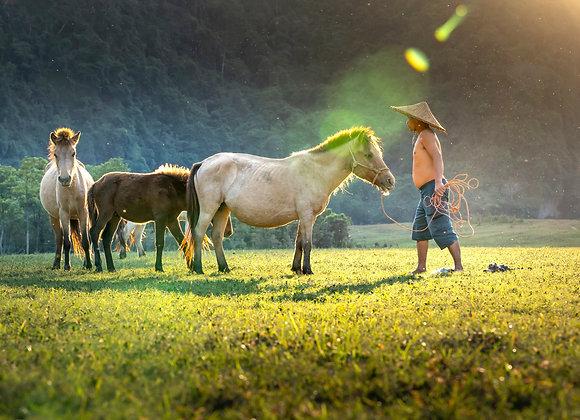 Horse herdsman