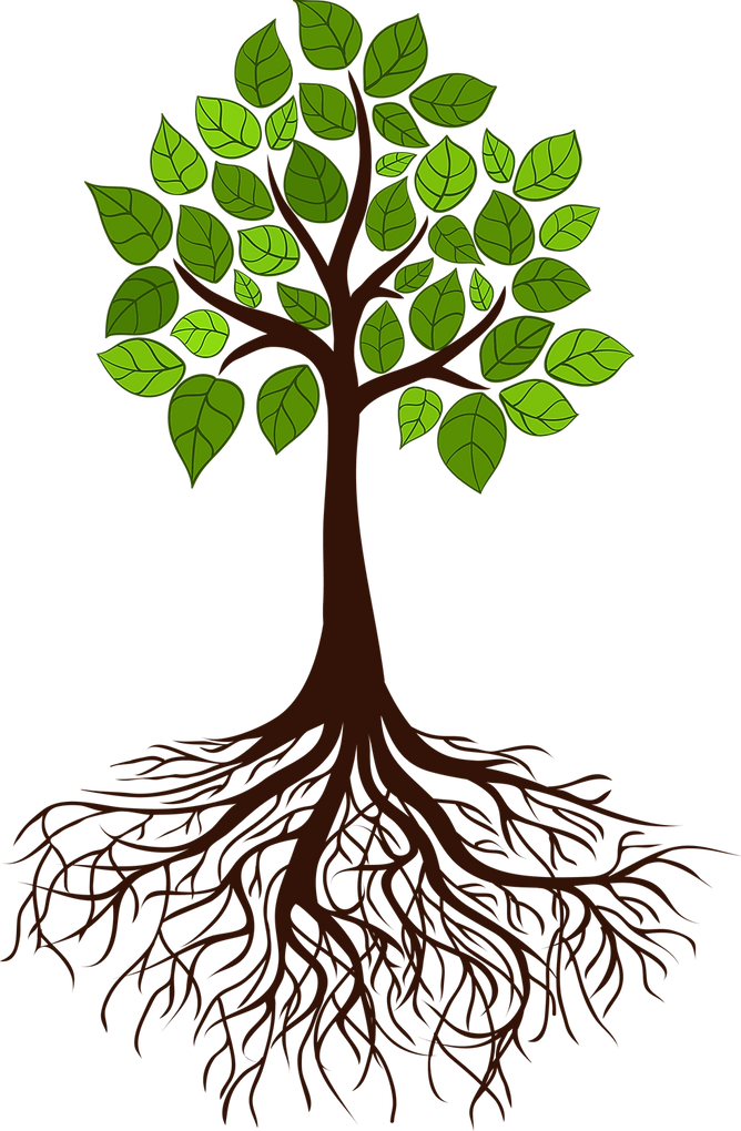 Rooted Tree