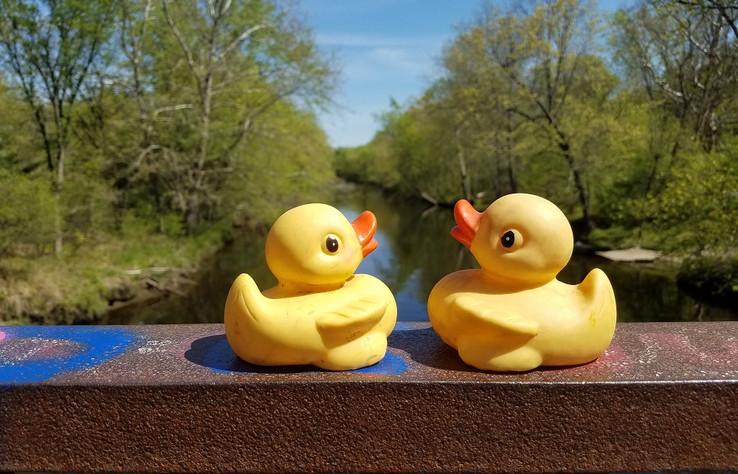 Two ducks pose.jpg