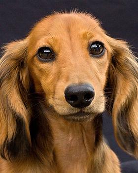 DogEaredPhotography.jpg