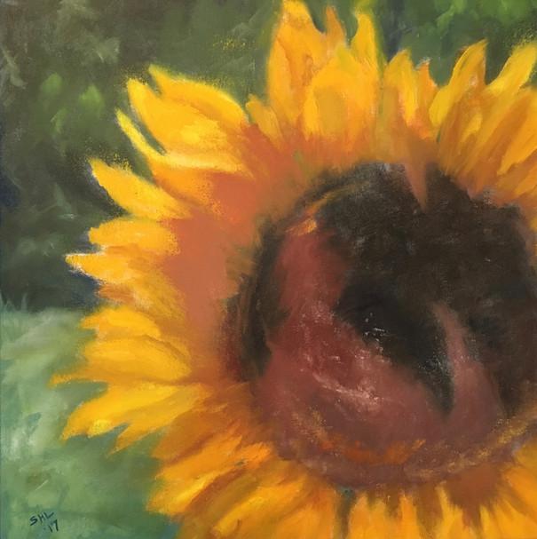 22 Bee shade17.jpg