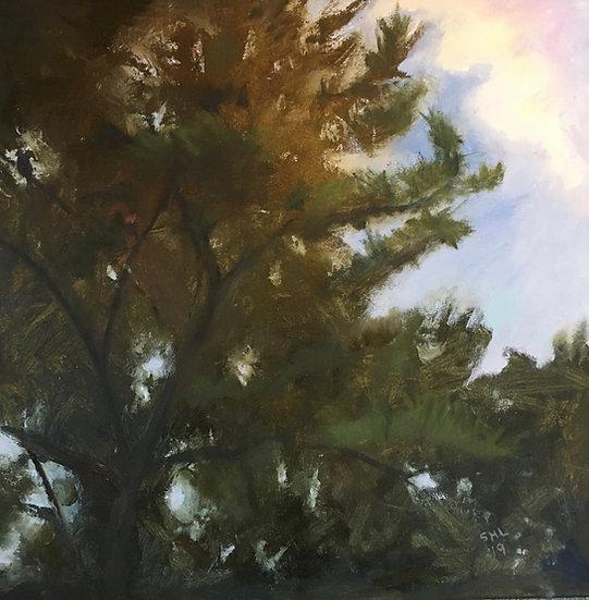 Pine top II - 24 x 24