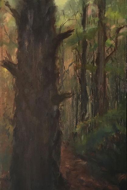 7 spring pine wood 20.jpg