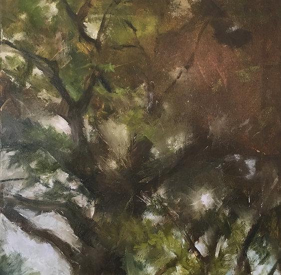 Pine top III - 20x 20