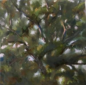 24 pinetop i 17.jpg
